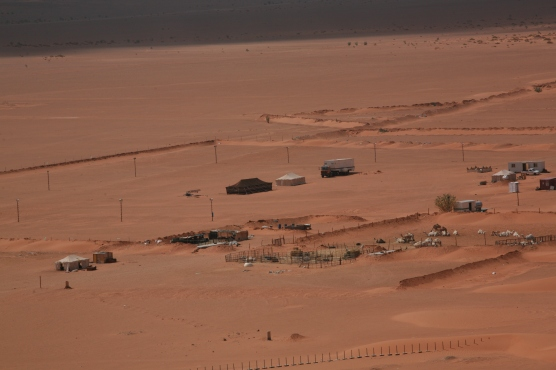 Camel Camp 084
