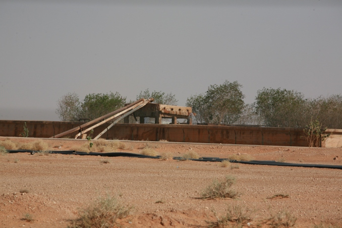 Camel Camp 136