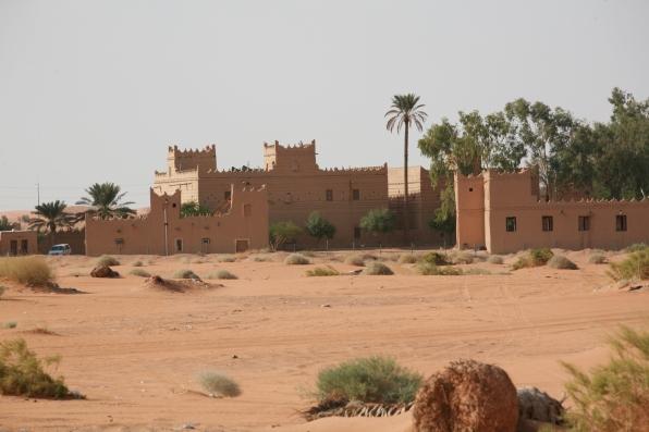 Camel Camp 140