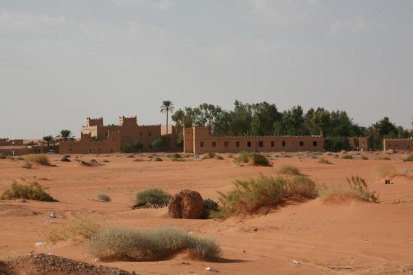 Camel Camp 141